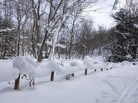大雪の森。 - ヒロムシ君のお散歩日記