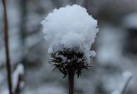 積雪 - 絵と庭