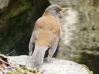 『木曽川水園にいた鳥達~』 - 自然風の自然風だより