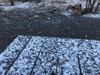初雪です - ひいぽぽタイムスNO.2