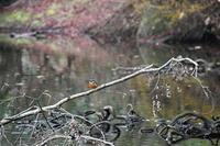 2018年に出会った鳥さんたち@千葉市動物公園 - Buono Buono!