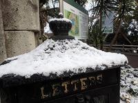 姫路に雪が降りました&ワークショップ - 手柄山温室植物園ブログ 『山の上から花だより』