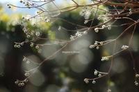 春がそこまで(2) - 流れのほとり