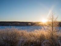 ついに極寒期がやって来ました。更別の霧氷も見頃です。 - 十勝・中札内村「森の中の日記」~café&宿カンタベリー~