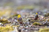 春の息吹 - ecocoro日和