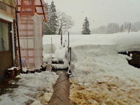 暖冬の積雪深を測ってみました - 浦佐地域づくり協議会のブログ