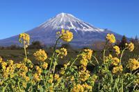 春が来たよ~! - 富士山大好き~写真は最高!