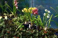 新宿御苑温室の植物たち - お散歩写真     O-edo line