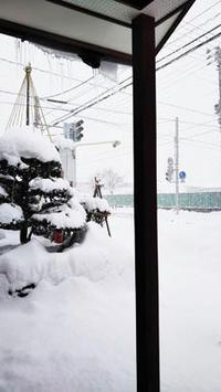 大雪~ - めがね職人の店プリーマ