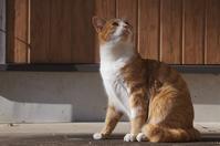 ムギちゃん - ネコと裏山日記