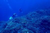 19.1.28大浦湾・リーフチェック - 沖縄本島 島んちゅガイドの『ダイビング日誌』