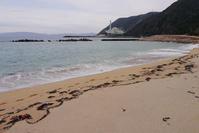 フレッシュ・なのりそ - Beachcomber's Logbook