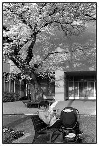 Street Snap B&W - 春のめざめ - 写像的空間