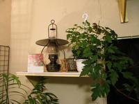 植物「Vine」 - 孤影悄然