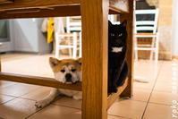 ごはん待ち - ノルマン犬猫日記
