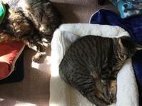 猫と琺瑯のポット - いととはり