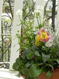 勇敢な小さな花たち - 心とカラダが元気になるアロマ&ハーブガーデン教室chant rose