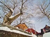 昨日も「雪の花」がきれいでした - 浦佐地域づくり協議会のブログ