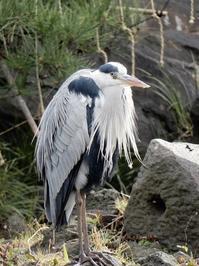 鳥の仙人A bird hermet - B.I.R.D.S