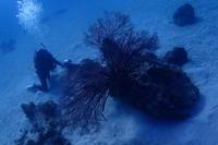 19.1.29浮原周辺で! - 沖縄本島 島んちゅガイドの『ダイビング日誌』