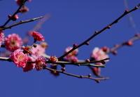 春が近い - 蓮華寺池の隣5