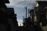 朝の散歩 -     ~風に乗って~    Present