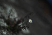 flowers(3cut)終わりの花 -     ~風に乗って~    Present