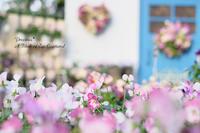 春色先取り♡華やかビオラ。 - Precious*恋するカメラ