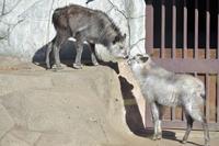 ムムと彼女 - 動物園へ行こう