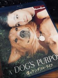 A Dog's Purpose / 僕のワンダフルライフ - 山田南平Blog