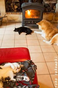 ひとり平和 - ノルマン犬猫日記