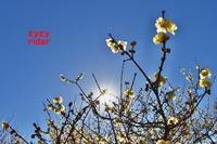 冬空の彩り(その11) - ジージーライダーの自然彩彩
