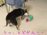 強引ジェンちゃん^^ - HAMAsumi-Life