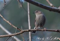 林道で会えた「カヤクグリ」さん♪ - ケンケン&ミントの鳥撮りLifeⅡ
