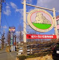 動物病院1月30日(水) - しんちゃんの七輪陶芸、12年の日常