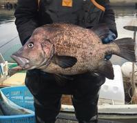 珍魚 ヒゲダイ - 漁・猟師(直売有)の主人と島で田舎暮らし~