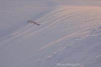 雪原をほのかに染めて - ekkoの --- four seasons --- 北海道