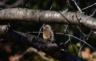 アリスイ01月27日-3 - 旧サンヨン野鳥撮影放浪記