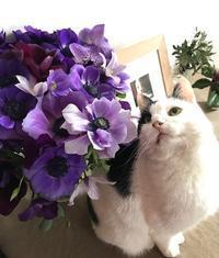 アネモネとホリー - la petite couronne de fleur