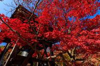 京の紅葉2018化野念仏寺の極彩色 - 花景色-K.W.C. PhotoBlog