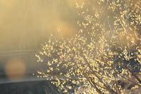 梅の香漂う - 写真の記憶