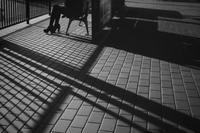 影の線 - haze's photos
