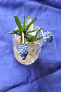 冬を愉しむ♪ - 小さな庭 2