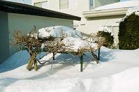 雪中の藤棚と亡弟の所感 - 照片画廊