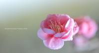 1月 雨の最終日 - 花々の記憶