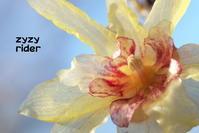 あっかんべー - ジージーライダーの自然彩彩