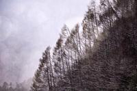 雪の黄昏 - たなぼた