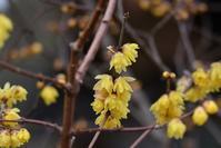 冬の花と実と・・・松平郷 - 鳥と共に日々是好日