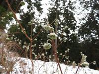 今季初スノーシュー♪【奈良県】1/27 - 静かなお山の森歩き~♪
