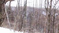 深雪の中、鹿を仕留める - 山谷彷徨